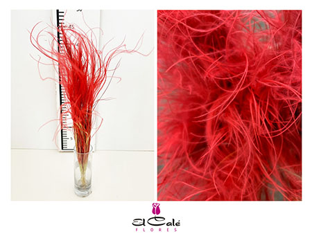 Dried stipa Red 40cm