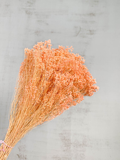 Broom Bloom Seco Rosa claro 100gr. 50cm